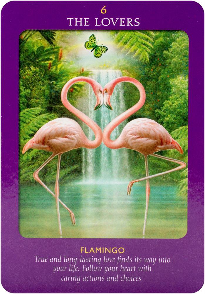 Tarotshop Animal Tarot Cards A 78 Card Deck And Guidebook