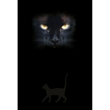 Bild på Cat's Eyes